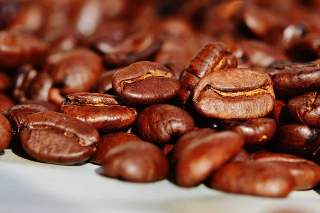 differences-entre-arabica-robusta
